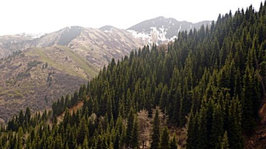 Алматы горы