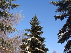 зима фото, ёлка